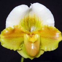 Welcome to Marriott Orchids!