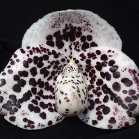 Lady Slipper Orchids, a primer