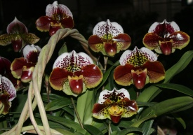 Red Paph Basket A3